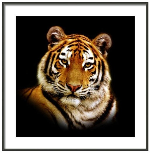 17 Best Images About Tiger Tattoos On Pinterest Sweater Shirt White Tigers And Tiger Cubs