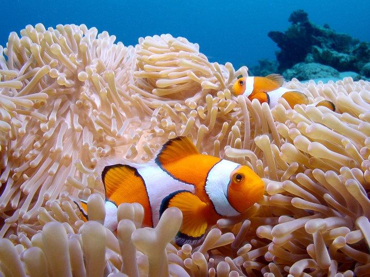 we found Nemo at Mafia Island