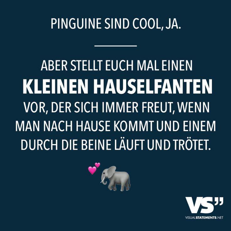 Pinguine sind cool, ja. Aber stellt euch mal einen kleinen Hauselefanten vor, der sich immer freut, wenn man nach Hause kommt und einem durch die Beine laeuft und troetet.