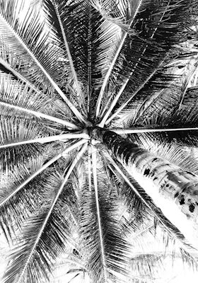 Close-up photography of a palmtree. Available as poster at printler.com, the marketplace for photo art. Photographer Sandra Josefsson.