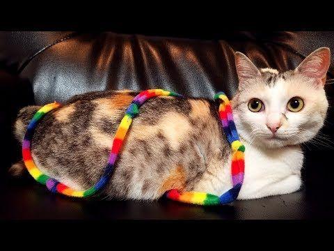 Cute Cat Videos  part8【Neko-Kichi's Cat life】