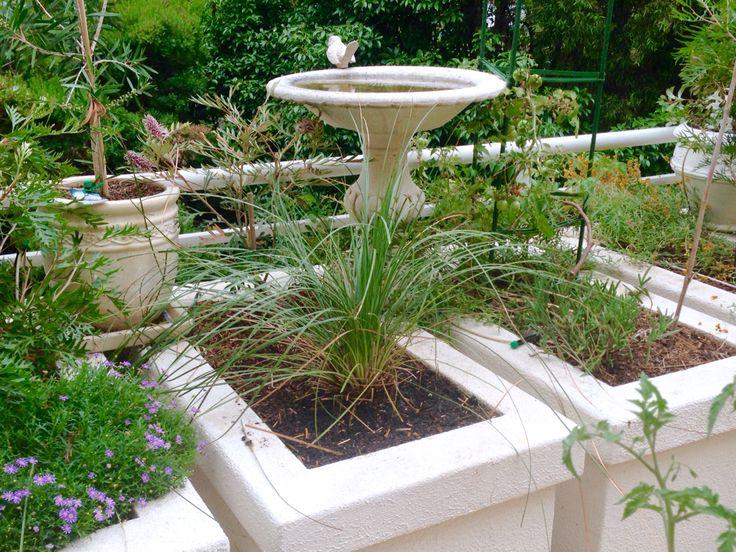 Australian Grasstree within Balcony Garden