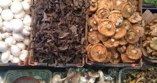 Resultado de imagen para fotos de setas (hongos) comestibles