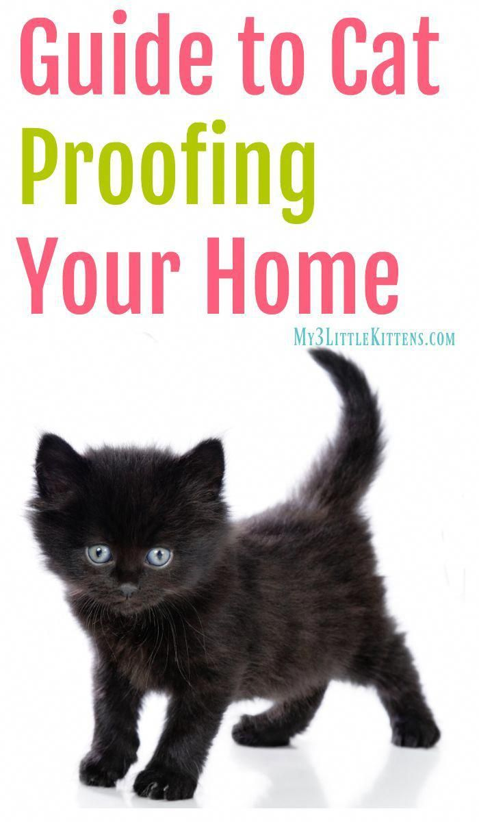 Guide To Cat Proofing Your Home Cat Proofing Cat Care Kitten Proofing