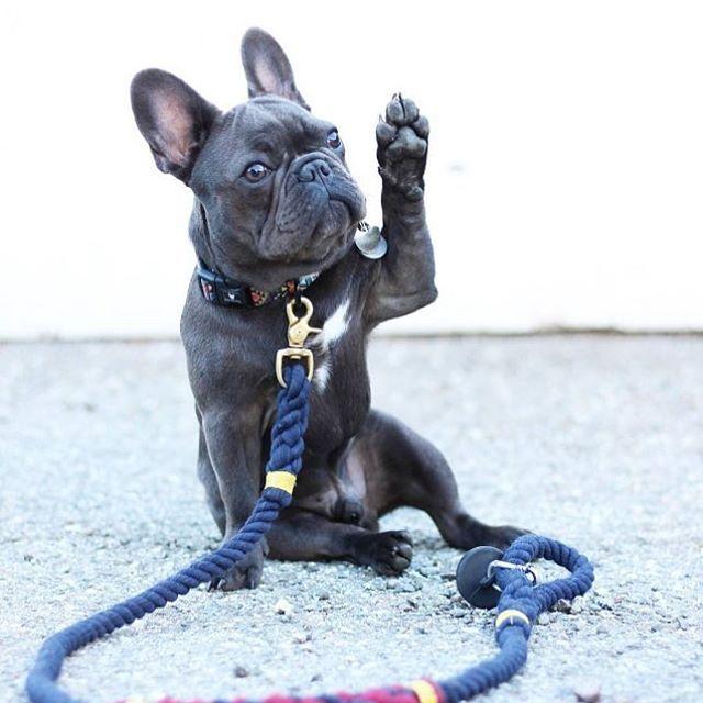 I'll have a doggychino!