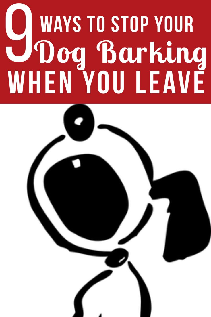 9 Ways to Stop Your Dog from Barking when you Leave
