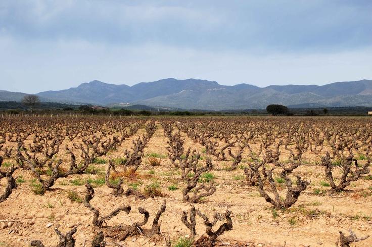 Invierno en la Finca La Garriga de Castillo Perelada. Durante los meses más fríos del año la vid se encuentra en reposo vegetativo.