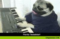 Perrito Tecladista!! :D