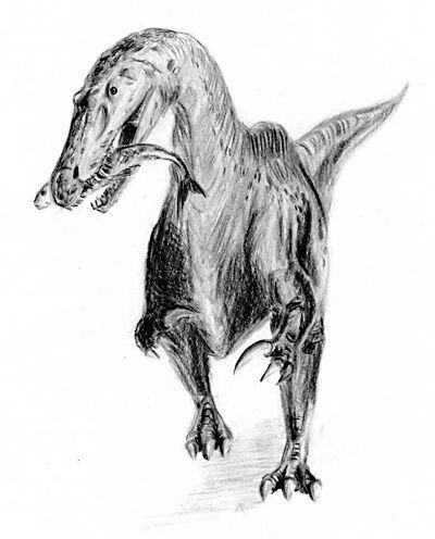 Actualité > Deux nouveaux dinosaures, carnivores, contemporains mais pas concurrents
