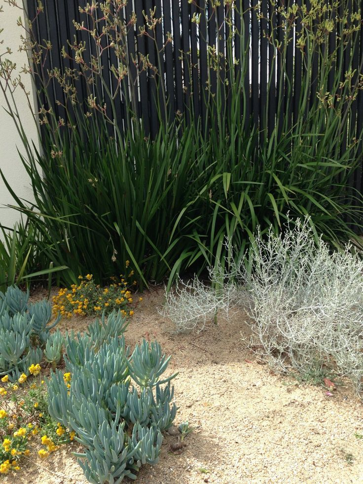 Natives and succulents at Cameron Paterson's Toorak garden