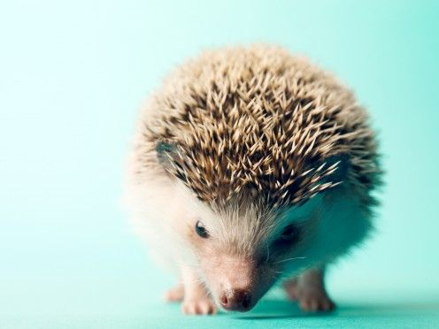 Hedgehogs are adorable little spiky balls of love! With the adoption of any animal comes the need for a name, and a hedgehog needs a name as sharp and as cool as he is!
