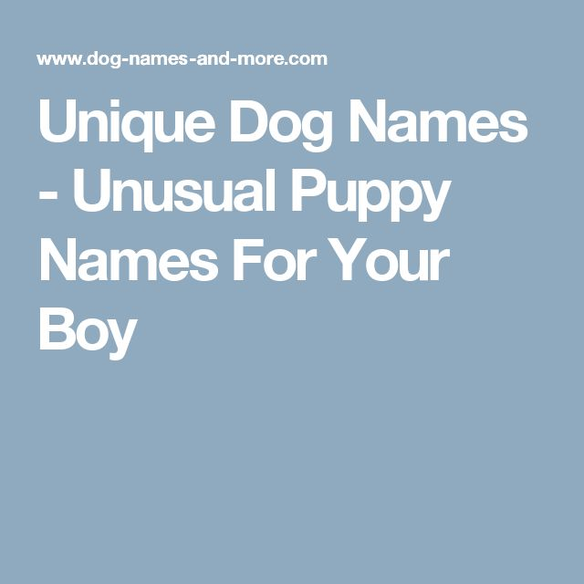 The 25 best boy puppy names unique ideas on pinterest puppy unique dog names unusual puppy names for your boy sciox Gallery