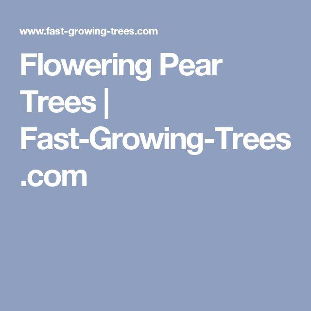 Flowering Pear Trees | Fast-Growing-Trees.com
