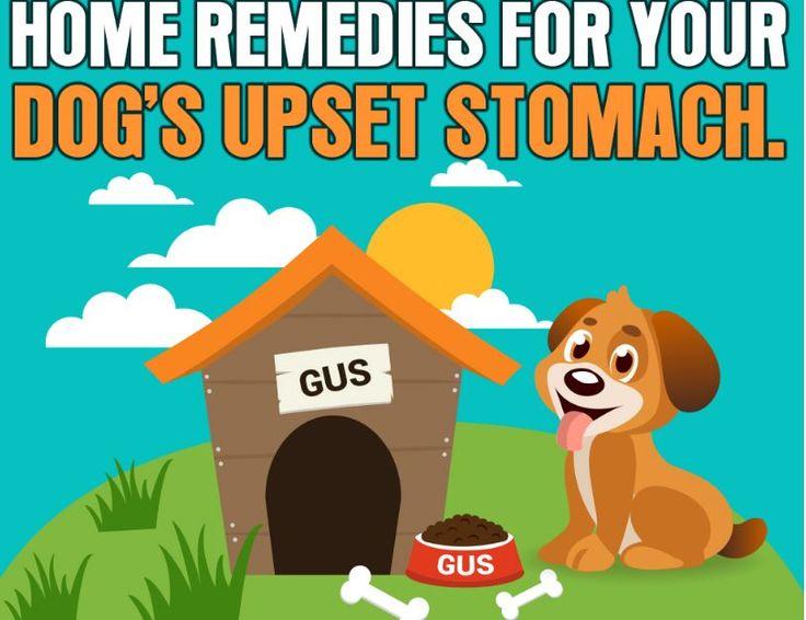Animal vomiting medication