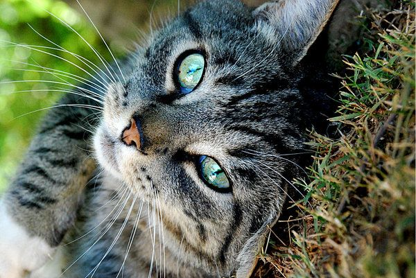 Love tabby cats they are so smart.
