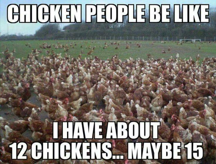 Baby Chicken Quotes: Best 25+ Chicken Humor Ideas On Pinterest