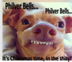 Tuna The Cheweenie!:)