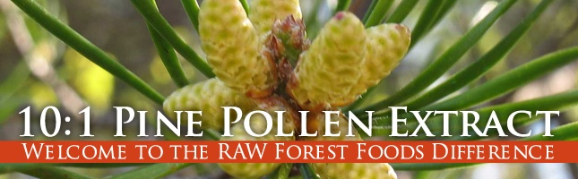 Pine Pollen Powder Extract @ RAW Forest Foods
