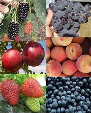 Fruits & Nuts | Yard & Garden | Arkansas Extension