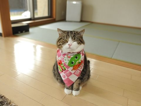 That is one chic scarf, Maru.