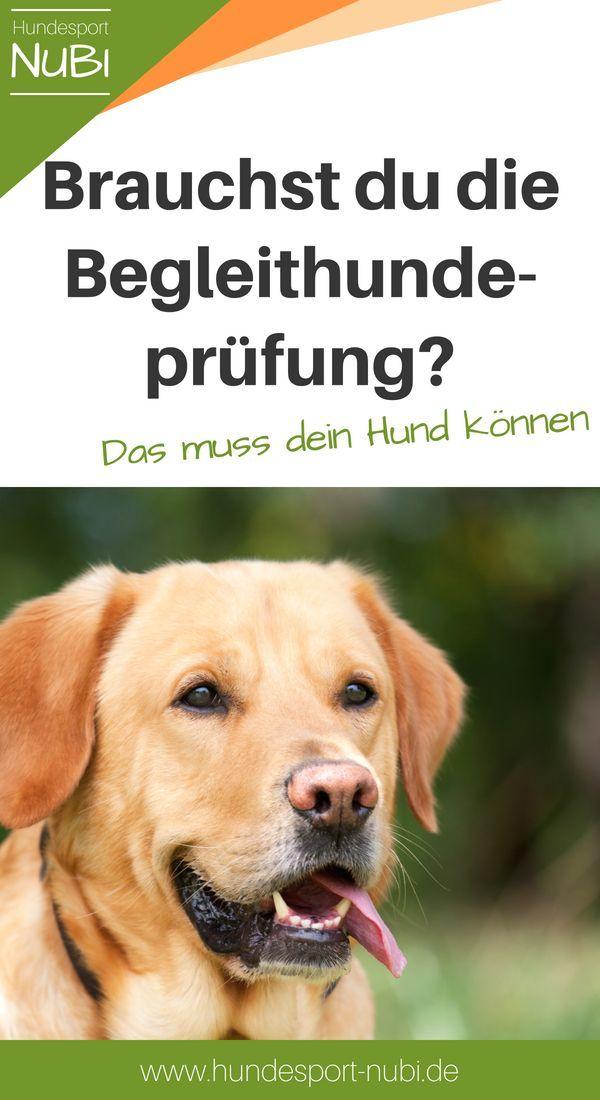 Begleithundeprufung Die Basics Fur Den Hundesport Hundesport Hunde Und Begleithund