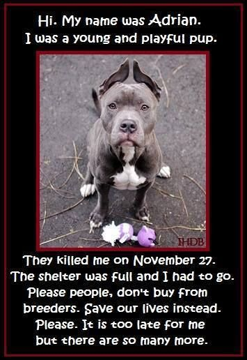 It's hard to fathom that even babies are killed in shelters. But the harsh reality is that there are too many homeless pets for any shelter to keep up with.   There are just two ways out of a shelter, no matter how young or cute you are; being adopted/rescued or being killed.   Don't breed, don't buy your pets from pet stores who support breeding. Save a life and rescue your next pet! https://www.facebook.com/photo.php?fbid=10152171191263758&set=a.138507293757.110746.99068383757&type=1