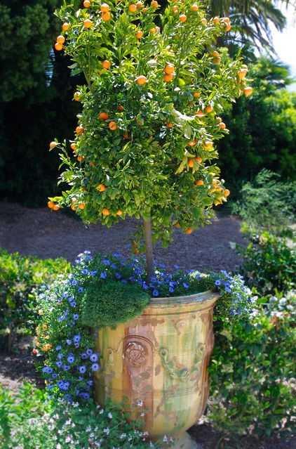 88 best images about fabulous planters on pinterest for When to transplant lemon tree seedlings