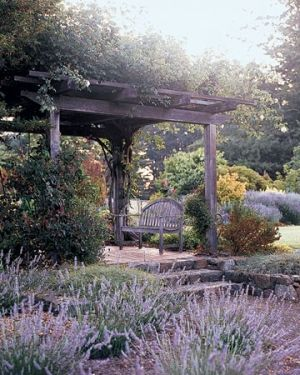 love the Mediterranean garden!    Lavender (1) From: Indulgy, please visit