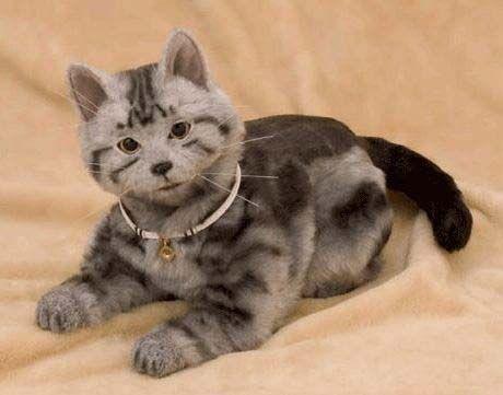 Три причины завести кота-робота  В Японии вы можете купить необычное домашнее животное — кота-робота по имени Некоро (NeCoRo). Внешне он выглядит так же, как обычный домашний кот, у него мягкая пушистая шерстка, кот умеет мяукать и шипеть. По всему телу кота-работа расположены тактильные сенсоры, слышит он ушами, а видит, как ни странно, носом (визуальные сенсоры находятся там). Кот пока не умеет ходить, зато может вставать на лапки, садиться, потягиваться и махать хвостом. Кот-робот издает…