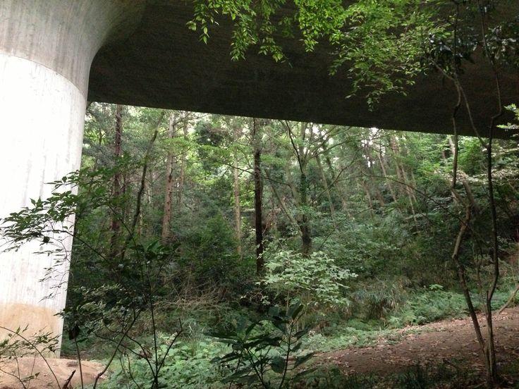 環状2号と、森 at 横浜市 #エクストリーム出社