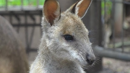 Australia... Citeste mai multe: http://www.imperatortravel.ro/2012/08/jurnal-de-australia-by-bogdan-popescu-episod-4-despre-australieni.html