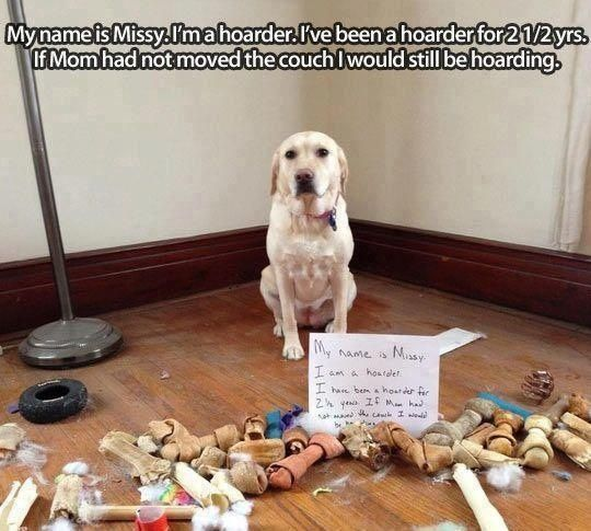 """Dog Shaming        Ruff!  """"Well God knows when we might just run out of a Dog's Bones, around here!"""""""