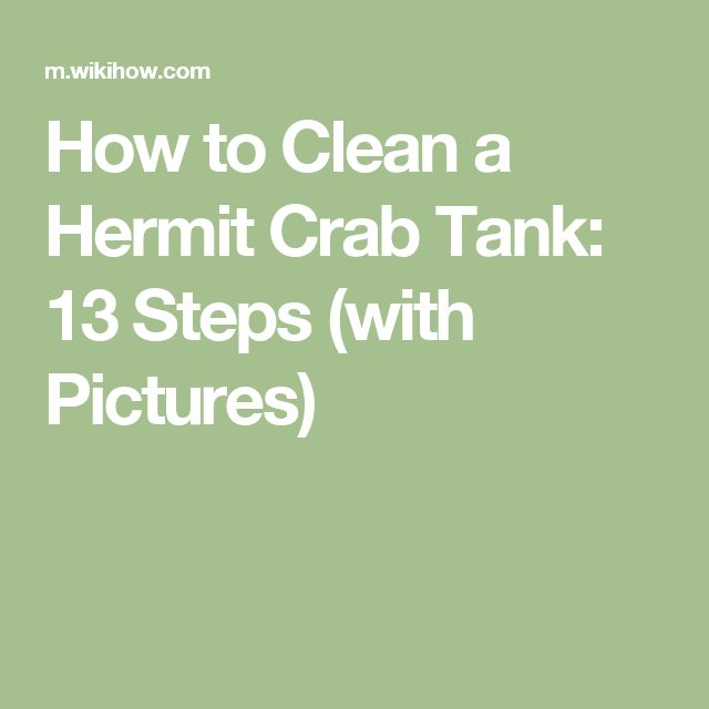 How to Clean a Hermit Crab Tank: 13 Steps (with Pictures)