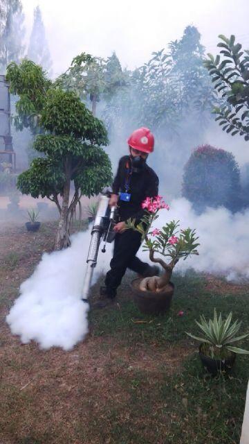 Jasa Fogging Nyamuk paling ampuh