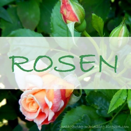 Von Tag zu Tag - Maries Blog: Rosenzeit