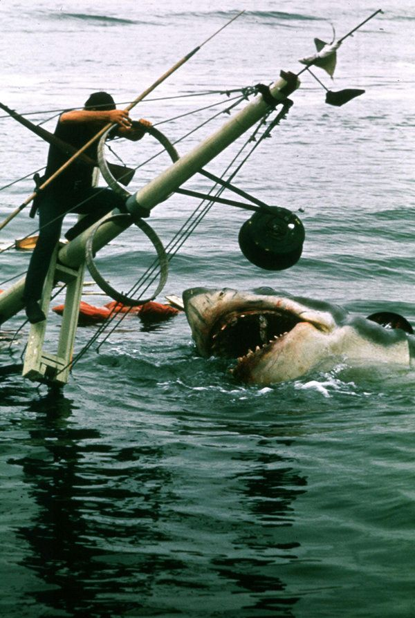 steven spielbergs jaws Steven allan spielberg, kbe (born december 18, 1946 in cincinnati) is an american film director, screenwriter, and producer who directed jaws he has won three.