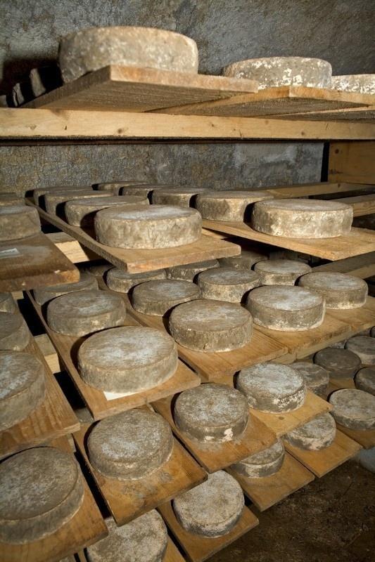 La Tome des Bauges - Eté - Savoie Grand Revard