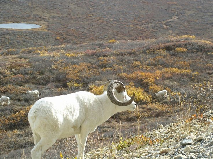Więcej na: http://puszystaowca.pl/wypas-owiec/