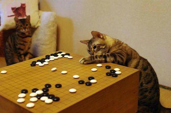go cat 2 550x364 picture
