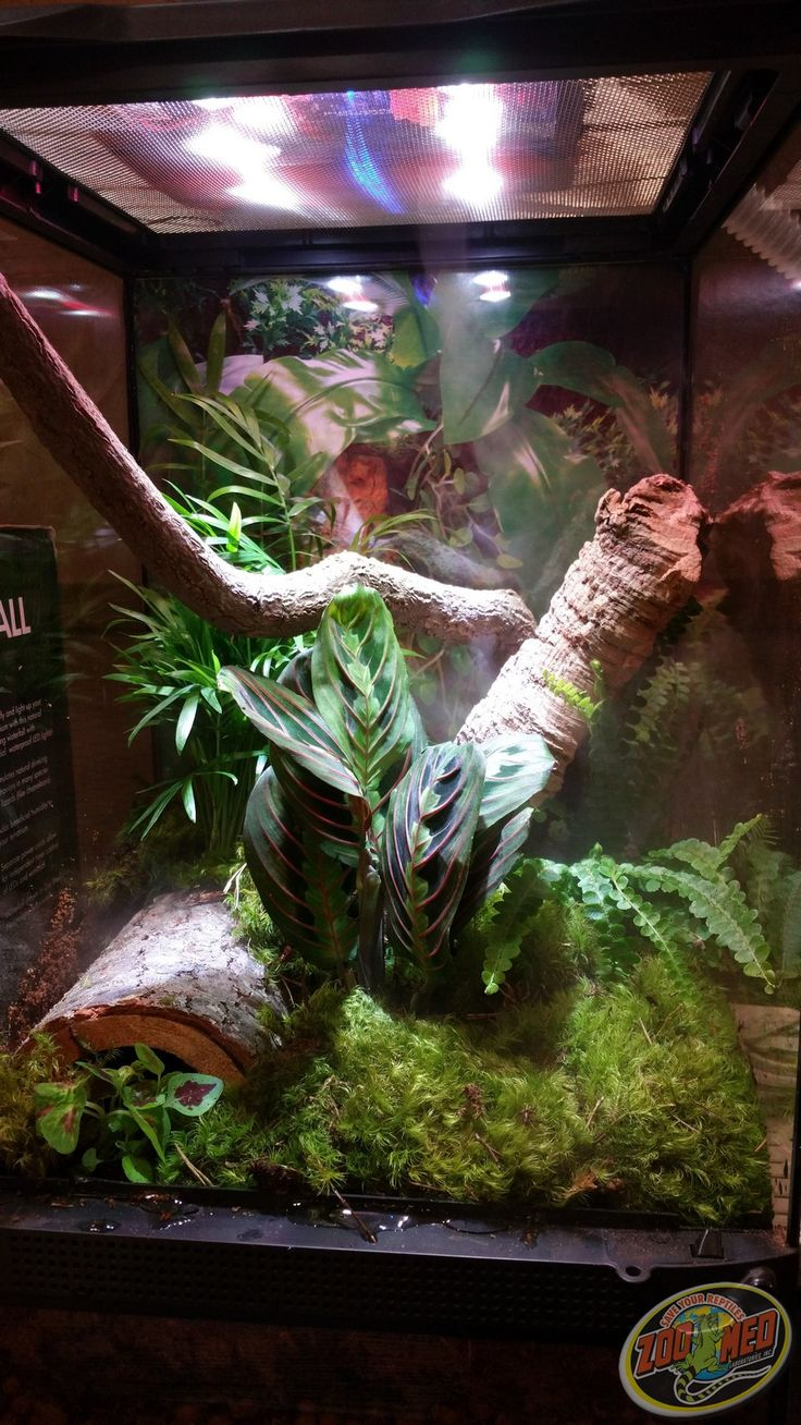 Custom Zoo Med Habitat From The Iowa Reptile Show And Sale