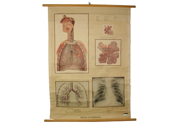 Vintage Science Wall Chart - respiratory system #vintage