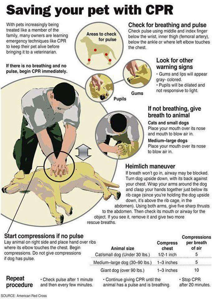 In addition to these CPR instructions, the American Red Cross has a very helpful checklist to help you prepare for an evacuation, create an emergency kit, and how to care for your dog during & after a disaster. Download it here: http://www.redcross.org/www-files/Documents/pdf/Preparedness/checklists/PetSafety.pdf