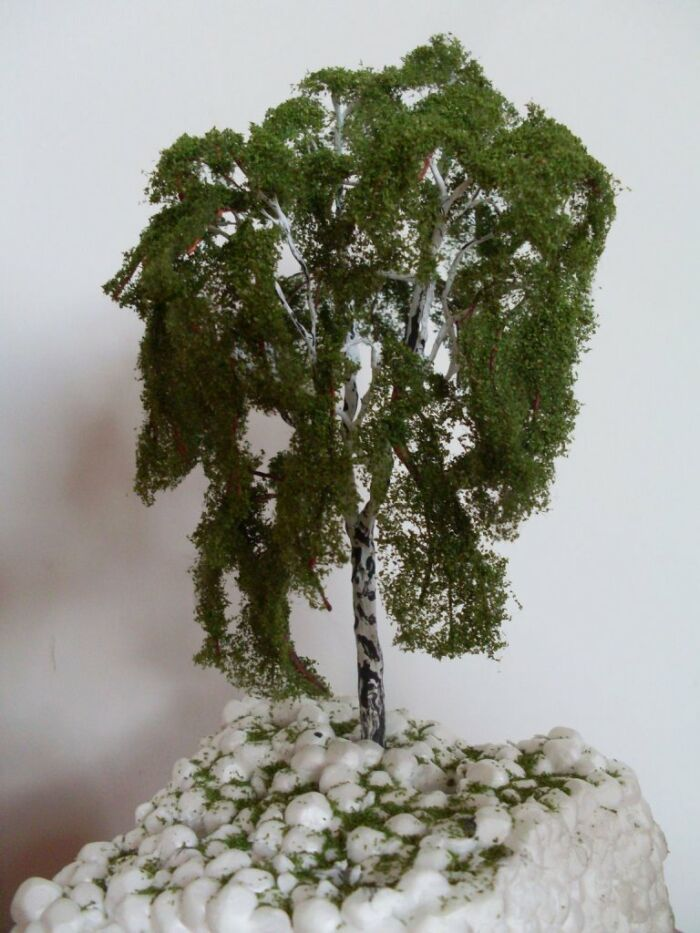 Birch in the scale h0 / tt