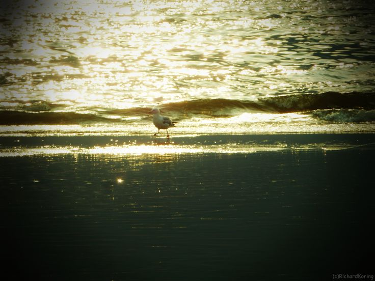 Seagull solo near the sea