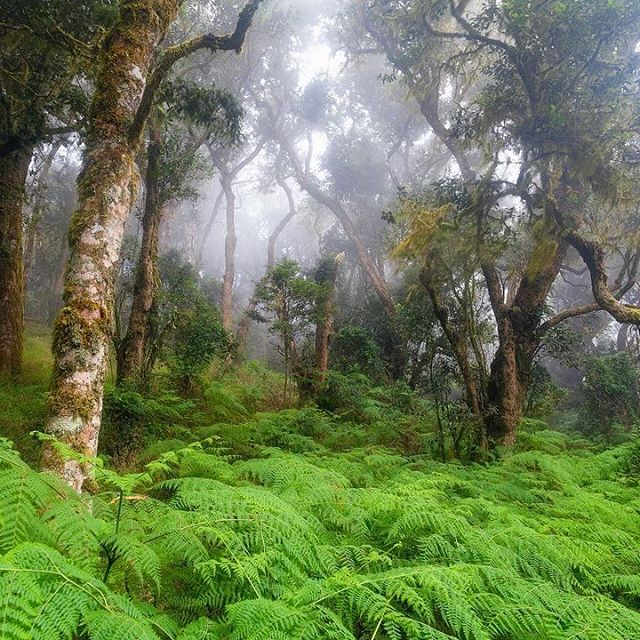 Magoebaskloof - Home to South Africa's most beautiful forests. #magoebaskloof #southafrica #forest #mist #nature #explore