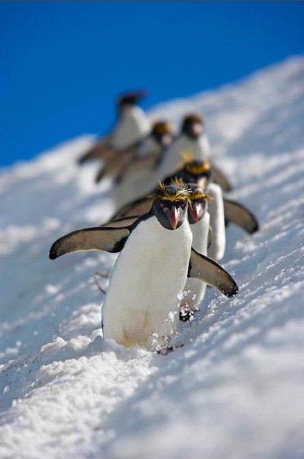 Natures Best Photography 2008 Award Winners photos penguins i like them so much i have lots of pictures of them