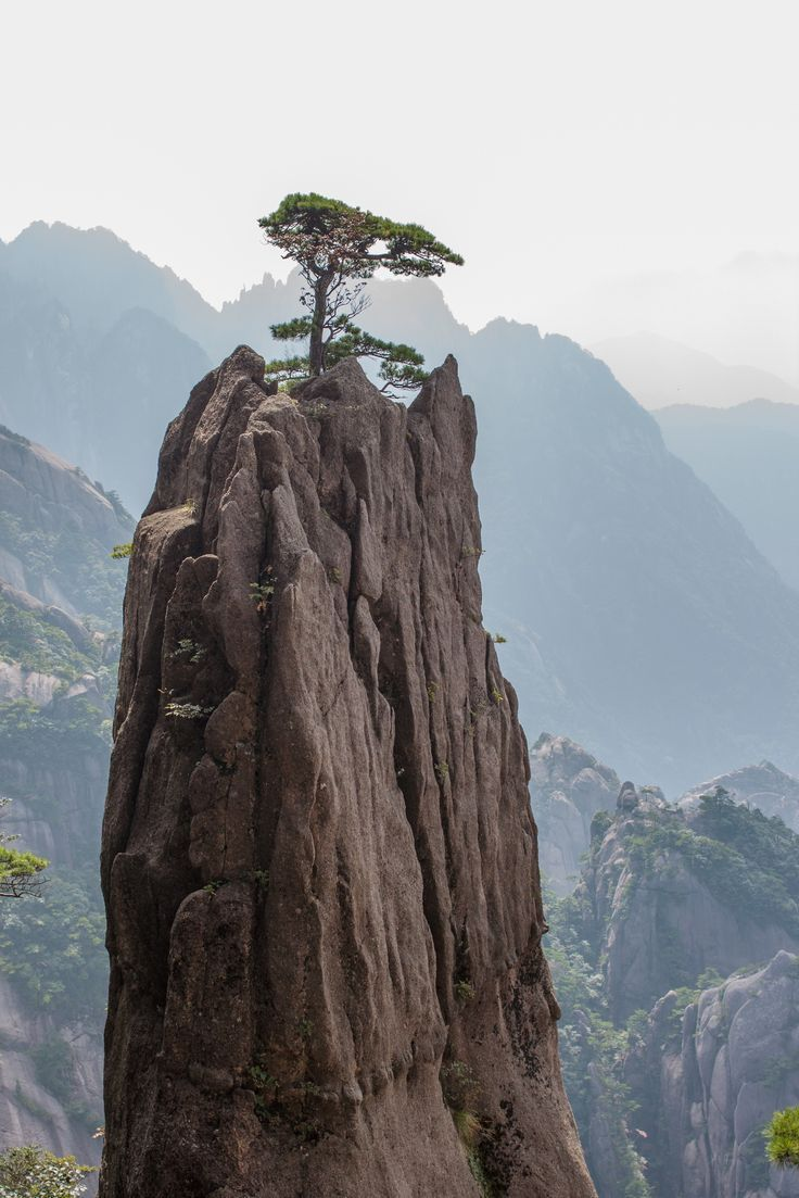 Great how this lonely tree could grow on top of the mountain. Seems