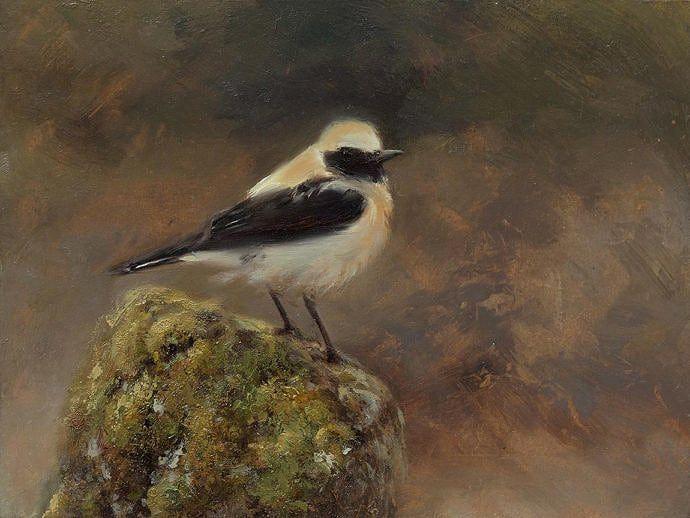 Gray Wheatear painting