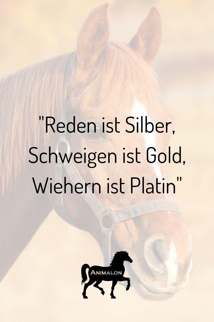 Reden ist Silber, Schweigen ist Gold, Wiehern ist Platin. Das ist unsere heutige Quote für euch 💖 #pferdesprüche #pferdezitate #pferdequote