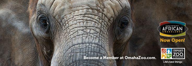 Home | Omaha's Henry Doorly Zoo | Entertainment Omaha | Visit Omaha | Things to do in Omaha, NE